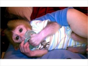 Monkeys Arkansas Free Classified Ads