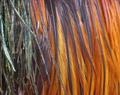 Natural Grizzly Rooster feather for your hair