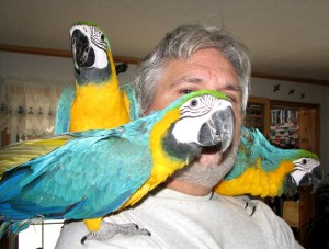 Birds Louisiana Free Classified Ads