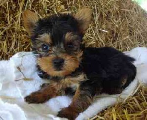 Pets Beckley Wv Free Classified Ads