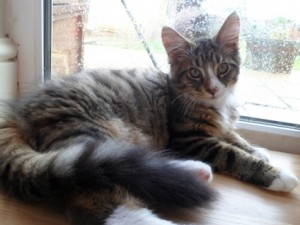 Cats - Indiana - Free Classified Ads