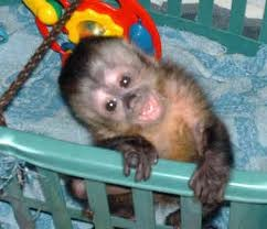 Monkeys Connecticut Free Classified Ads