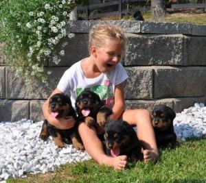 Dogs For Adoption Keene Nh