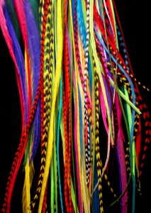 highly colored grizzly rooster feathers for sale