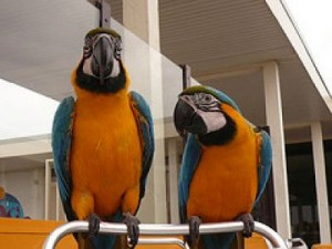 """Blue and Gold Macaw"""
