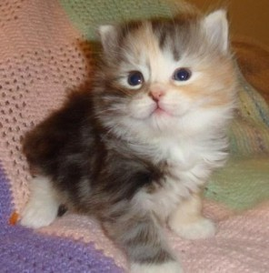 Cats Texas Free Classified Ads