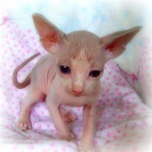 Cats - Kentucky - Free Classified Ads