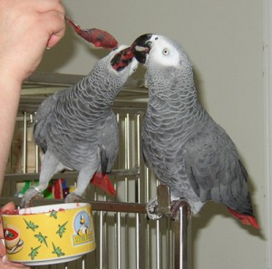 We have healthy,trained and tamed parrots for sale,