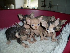 Cats - Wyoming - Free Classified Ads