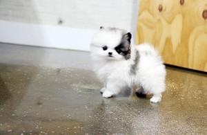 Pets Denver Co Free Classified Ads