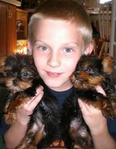 ADORABLE X-MASS MALE AND FEMALE TEACUP YORKIE PUPPIES FOR FREE ...