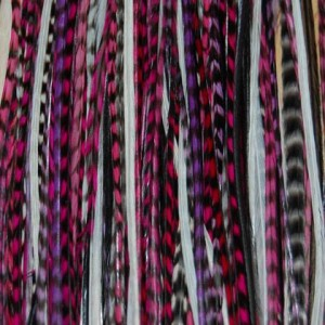 Grizzly Rooster Saddle Feathers for Hair Extensions Earrings and more. Specifications We are suppliers of grizzly ro