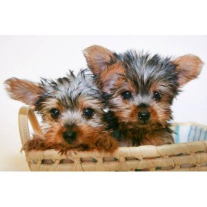 Pets - Florence, SC - Free Classified Ads