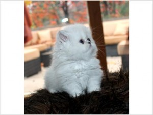 Cats - Colorado - Free Classified Ads