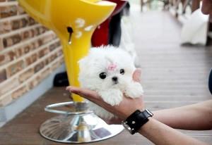 Dogs Virginia Beach Va Free Classified Ads