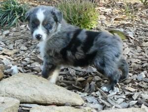 Granger Indiana Dog Adoption