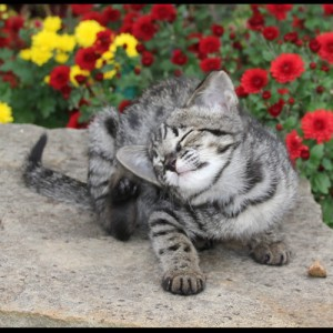Cats New York Free Classified Ads