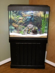 37 Gallon Fish Tank With Stand Bartow Fl Asnclassifieds