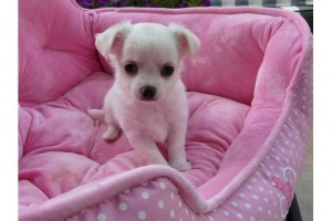 Dogs - Indiana - Free Classified Ads