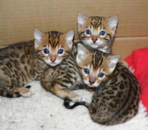 boys names for kittens