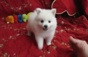 Pets - Meridian, MS - Free Classified Ads