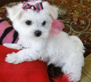 Dogs - Commerce City, CO - Free Classified Ads