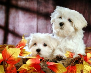 Dogs - Tennessee - Free Classified Ads