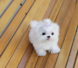 Dogs North Las Vegas Nv Free Classified Ads