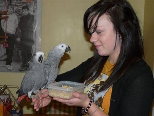 African Grey Parrots For Adoption Houston Tx