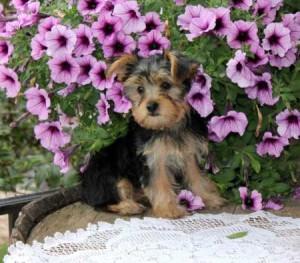 Pets - Bloomington, IL - Free Classified Ads