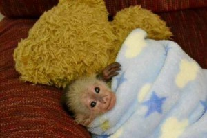 Very Sweet Little Monkey