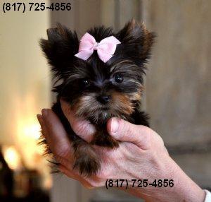 Dogs - Binghamton, NY - Free Classified Ads