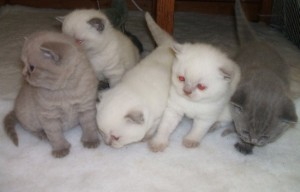 Cats - Free Classified Ads
