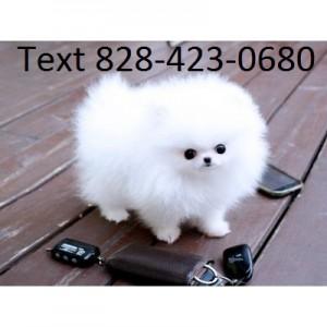 Dogs Abilene Tx Free Classified Ads