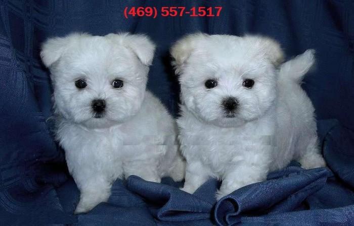 Free puppies in clovis nm
