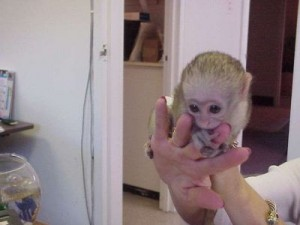 Monkeys Louisiana Free Classified Ads