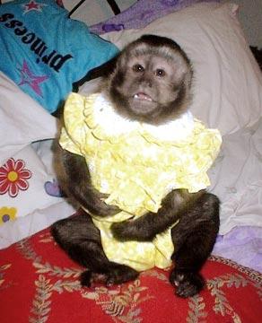 Monkeys - Missouri - Free Classified - 24.2KB
