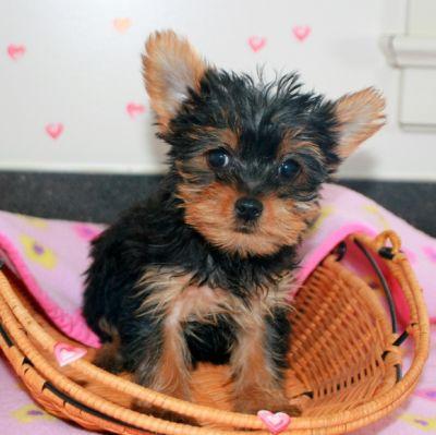 Pets North Carolina Free Classified Ads