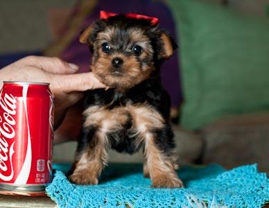Pets Florence Ky Free Classified Ads