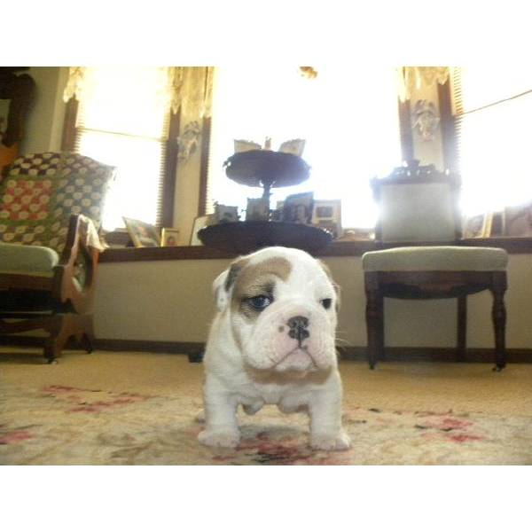 Dogs - Mobile, AL - Free Classified Ads
