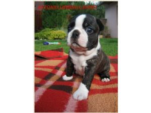 Dogs North Augusta Sc Free Classified Ads