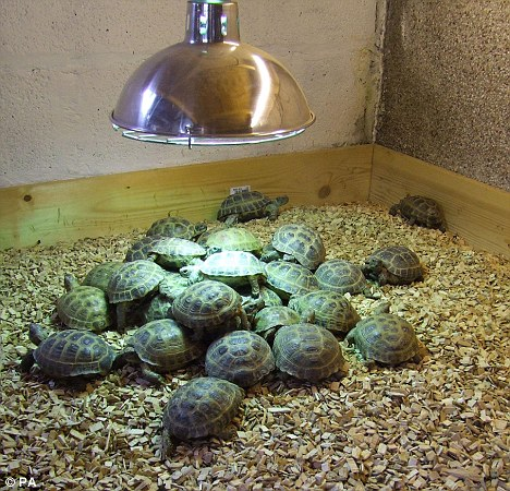 Cute Tortoises For Sale Atlanta Ga Asnclassifieds