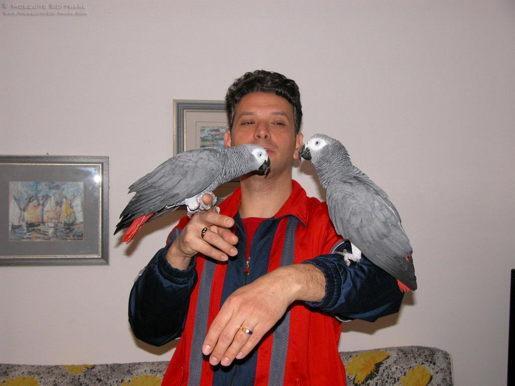 African Grey Parrots For Sale - Miami, FL | ASNClassifieds