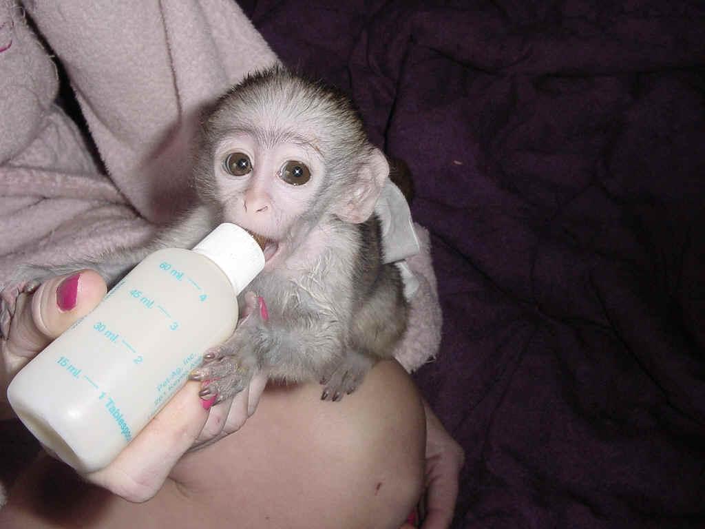 Monkeys - Birmingham, AL - Free Classified Ads