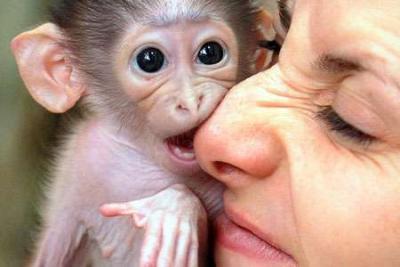 Monkeys North Carolina Free Classified Ads