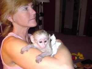 Capuchin monkey for Adoption to any pet loving and caring family