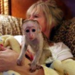 adorable capuchin monkeys for a home