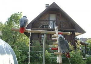 Cute african grey parrots for adoption..
