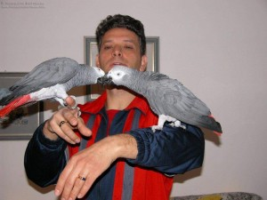 Beautiful Gorgeous Male And Female African Grey Parrots For Sale Now Ready To Go Home