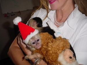 Male and Female Capuchin and Marmoset monkey to a good home